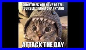 Image Result For Funny Cat Memes Clean Dog Memes Clean Cat And