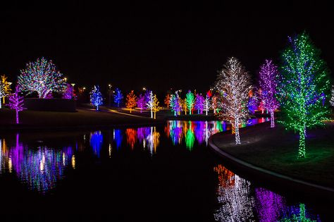 Chromatic Christmas Trees Vitruvian Park Addison Texas Area Absolutely Breathtaking