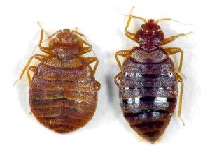 Richard Bugman Fagerlund Says Don T Let The Bedbugs Bite With