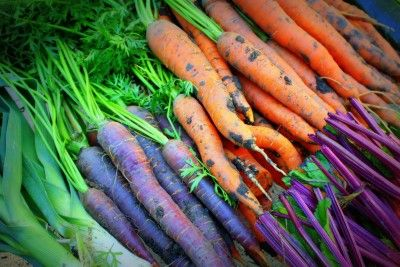 Homegrown Carrots - here's everything you need to know to grow sweet delicious carrots - even in heavy clay soils.