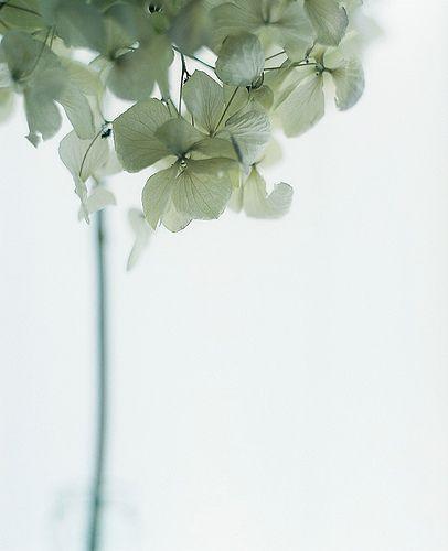 Sage Green Petals