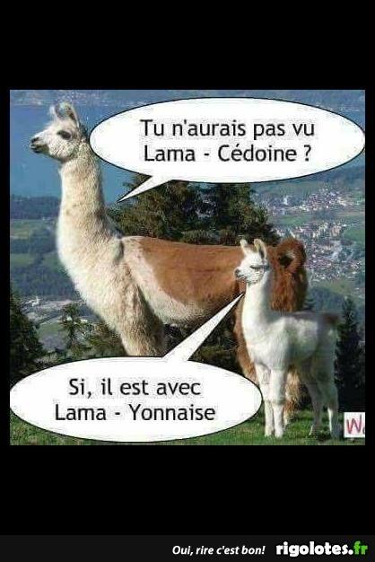 Jeux De Mots Humour : humour, Épinglé, Laetitia, Gomand, Dicton, Mots,, Photo, Humour,, Humour