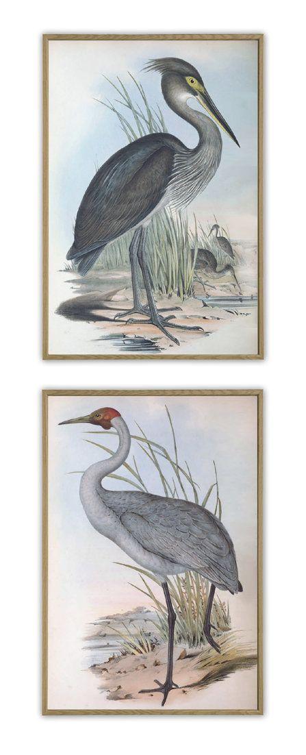 Birds Prints Set Of 2 Antique Bird Illustration Ornithology Poster Heron Crane Antique Birds Print In 2020 Antique Bird Illustration Bird Prints Wall Art Prints