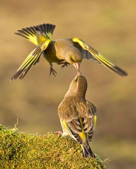 die 429 besten bilder zu vögel in 2020  tiere vogelwelt