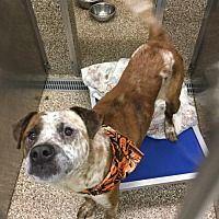 Pet Card Pets Pitbull Terrier Humane Society