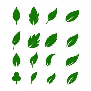 Leaf Icons Vector Design Leaves Green Concept Illustration Isolated Nature Premium Leaf Icon Isolated Png And Vector With Transparent Background For Free Dow Vector Design Leaf Illustration Leaf Clipart