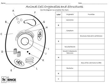 Plant And Animal Cell Organelles And Structures Worksheets With