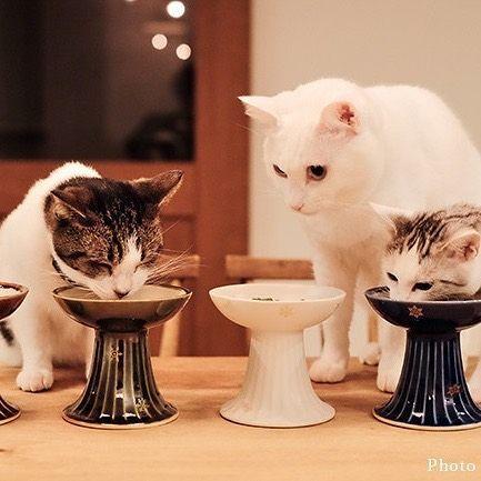 愛猫にクリスマスプレゼント 猫に幸せを運ぶ猫皿ブ ニャン