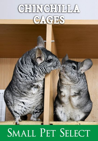 Find Out What Chinchilla Cages Should Have Best Size Bedding