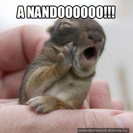 A Nandoooo!! immagine divertente, cucciolo sembra che urli a nandooo in romanesco. animali simpatici buffi, risate