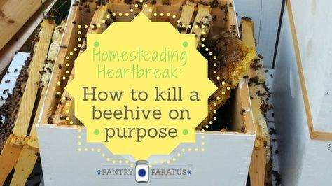 We've done a few things on our homestead over the years; recently, we've added…