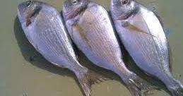 محتويات 1 تفسير حلم السمك للزوجة 2 تنظيف السمك في الحلم للعصيمي 3 السمك في حلم الرجل للعصيمي 4 رؤية حلم السمك للعصيمى تفسير رؤية حلم السمك للعصيمي في ا Fish