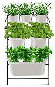 2cce6a3424766555f6bc490f1a5dc052 - What Type Plants Are Suitable For Micro Gardening