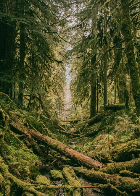 Forest Photography, Conceptual Photography, Landscape Photography, Scenic Photography, Outdoor Photography, Forest Pictures, Green Photo, Nature Aesthetic, Beautiful Forest