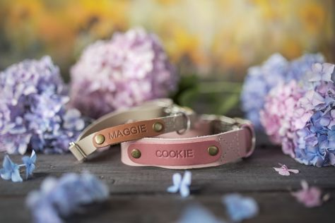 Your puppie cutie will appreciate the beauty of her stunning new leather dog collar. Spring can still be a bit more sweet despite all the hardship happening. Leather Cat Collars, Cool Dog Collars, Dog Accesories, Leather Accessories, Pet Accessories, Personalized Cat Collars, Dog Collar With Name, Custom Dog Tags, Leather Portfolio