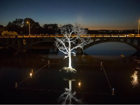 Did the white tree hovering over Lady Bird Lake bring on the rains?