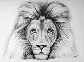 Lion Drawing By Lethalchris Lion Face Drawing Lion Drawing Kitten Drawing