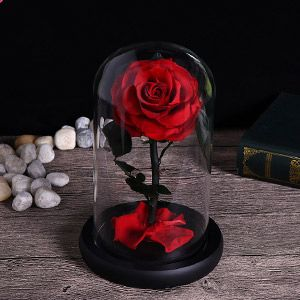 Red Rose In Glass Jar Beauty And The Beast Rose In Glass Dome