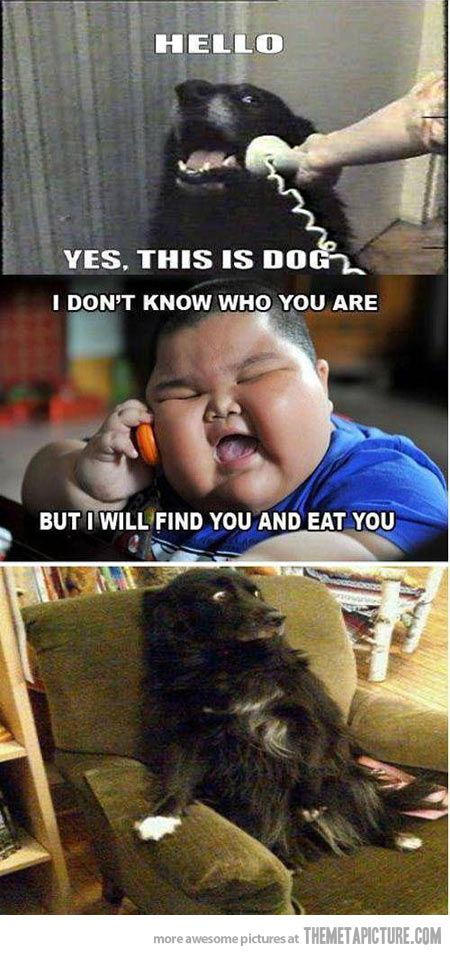 Asian Dog Meme : asian, Asian, Memes/Pics