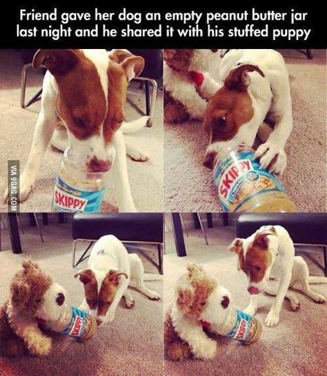 This is why dogs are better than humans.