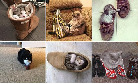 6dc003a1c2404 Super-cute photos that show ALL cats secretly want to be Puss in Boots