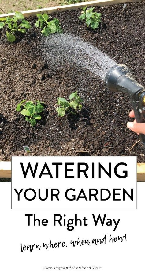 water your vegetable garden the right way sage and shepherd farm