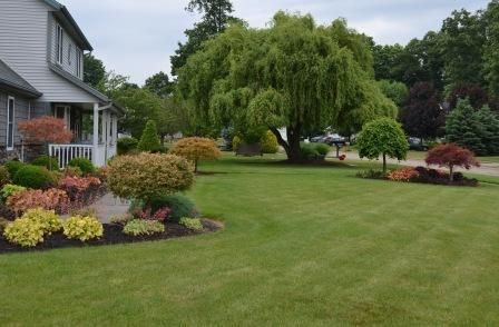 Front Yard Landscaping Golden Curls Weeping Willow Tree Curls