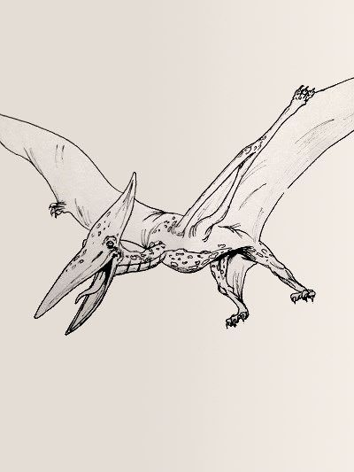 Pterodactyl Dinosaur Coloring Page Dinosaur Coloring Pages