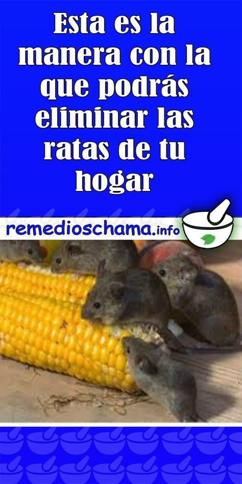Como Acabar Con Las Ratas En El Jardin Esta Es La Manera Con La Que Podras Eliminar Las Ratas De Tu Hogar