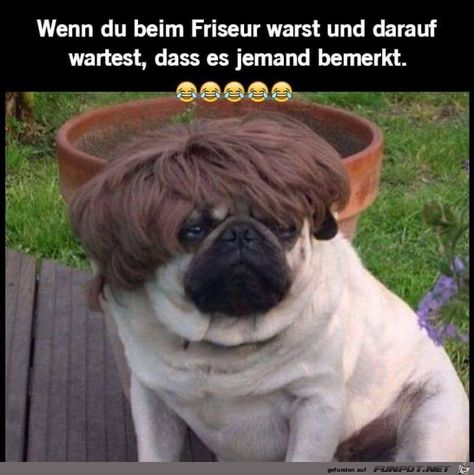 List Of Friseur Lustig Ideas And Friseur Lustig Photos