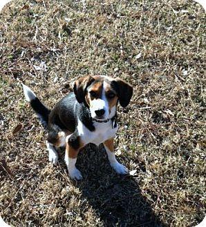 Birmingham Al Beagle Mix Meet Dovie A Dog For Adoption Dog