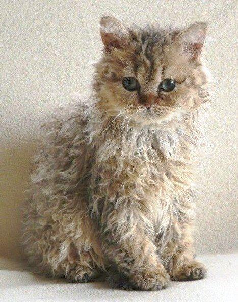 Ah Cute Cats For Sale In Karachi Twitter Kittens Cutest