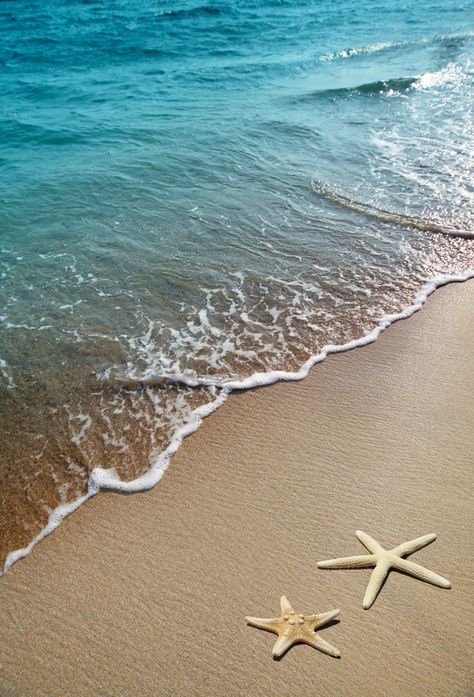 two starfish on a beach by Liliia Rudchenko on @creativemarket