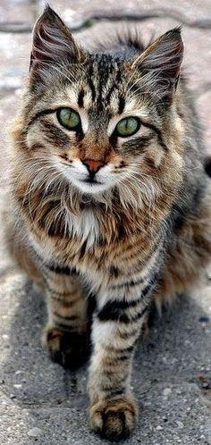 Katzenrassen Die Klein Bleiben Bleiben Die Katzenrassen