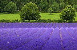 THE FLOWER SHOP · My Secret GardenFlower ...