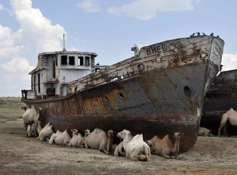 Shipwreck surrounded by camels in the desert