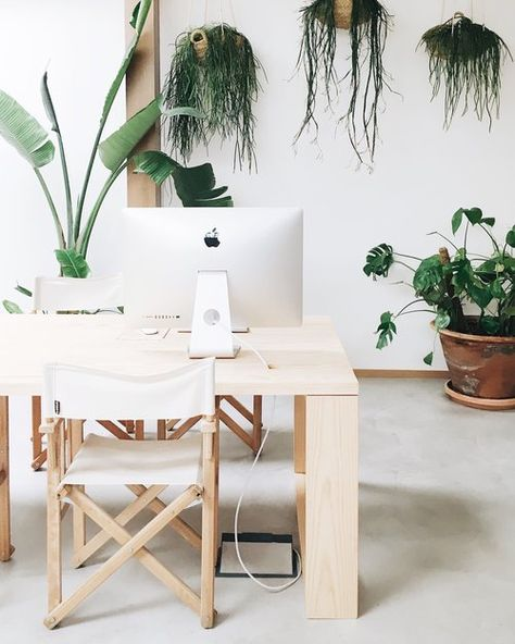 Modern clean workspace with hanging plants