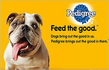 Pedigree Daily Oral Care Products Starting At Rs 100 Pet Supply