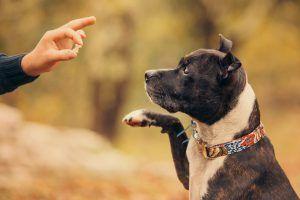 Elecane Dog Bark Collar Review Off Leash Dog Training Bark
