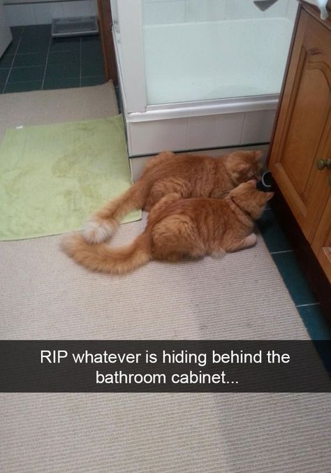 42 Funny #CatSnapchats That You Need To See Right Now!