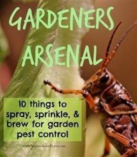 Pest Control Hard Mode Ajpw Pest Control Nitrome Pest Control Near Me For Yellow Jackets Local Pest In 2020 Garden Pest Control Organic Pest Control Pest Control