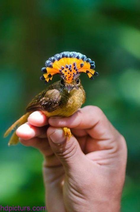 صور حيوانات 2018 خلفيات حيوانات جميلة وصور اجمل الحيوانات Pet Birds Amazon Animals Pretty Birds