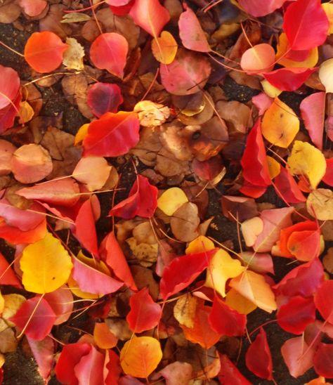 Finally some autumn leaves #stkilda #pilgrimclothing
