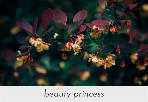 List Of Pinterest Beauty And The Beadt 2017 Quotes Pictures