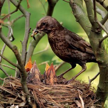 7 Tipps Fur Den Perfekten Vogelgarten Susseste Haustiere Vogel Im Garten Mein Schoner Garten Spezial