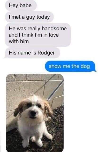 Idea By Misty James On Pets Fancy Dog Collars Fancy Dog Dog