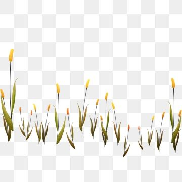 Hand Painted Reed Plant Nature Nature Clipart Illustration Creative Cartoon Png Transparent Clipart Image And Psd File For Free Download Reeds Plants Hand Painted Graphic Design Background Templates