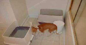 Dog Litter Box Training Dog Litter Box Dog Potty Training Cat
