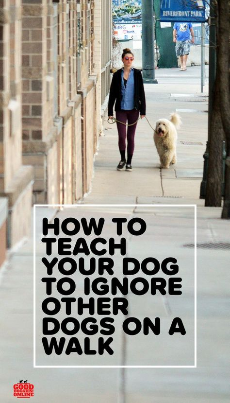 How To Teach Your Dog To Ignore Other Dogs On Walks Best Dog