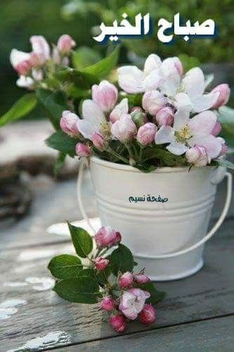 وأسألك ربي المتسع والي سر في كل أمرنا يارب سعادة القلب وقرار العين وجميل البشائر و Spring Flowers Beautiful Flowers Flower Arrangements